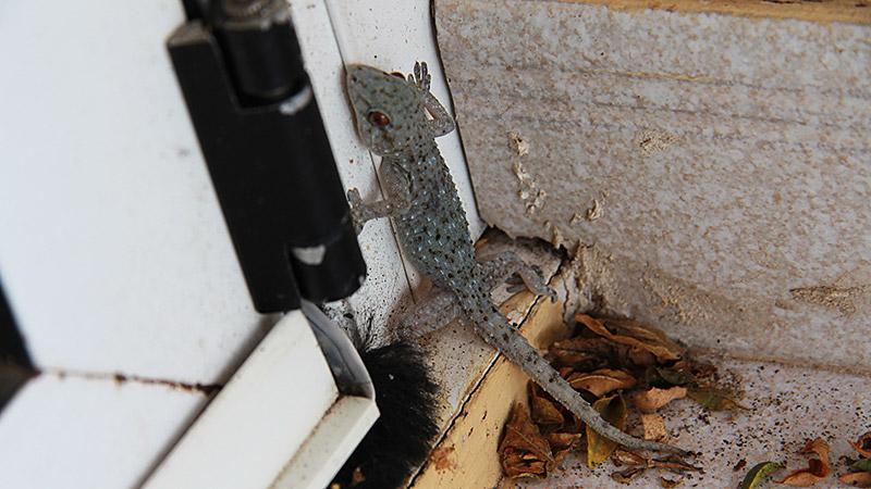 Gecko nicht mehr im Weg