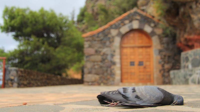 Eine tote Taube liegt vor der Ermita del Santo in Arure