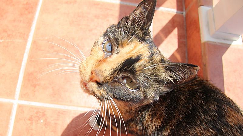 Katze zu Besuch mit krankem Auge