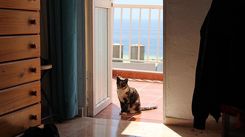 Katze zu Besuch auf der Türschwelle