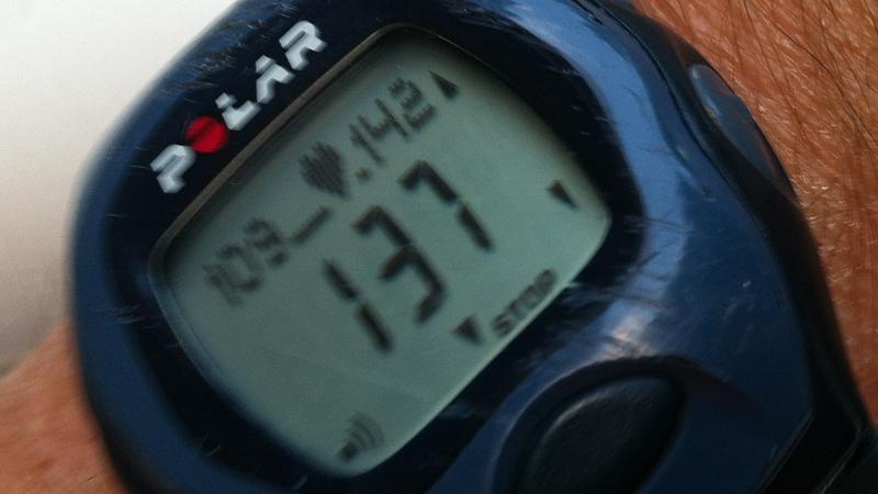 Ein Puls von 137, während ich unterwegs bin an Rhein und Main rund um Mainz