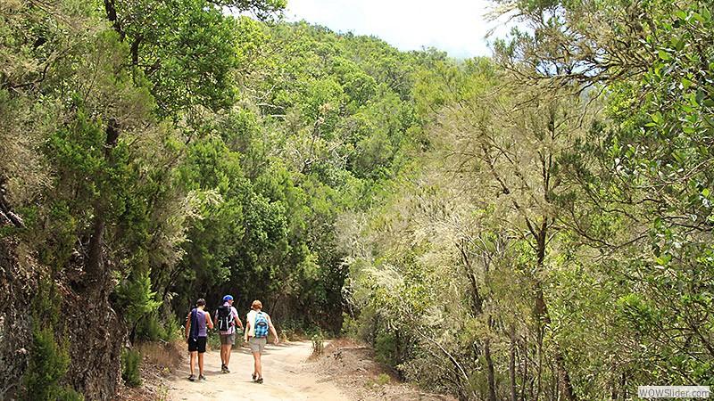 Im Wald von El Cedro