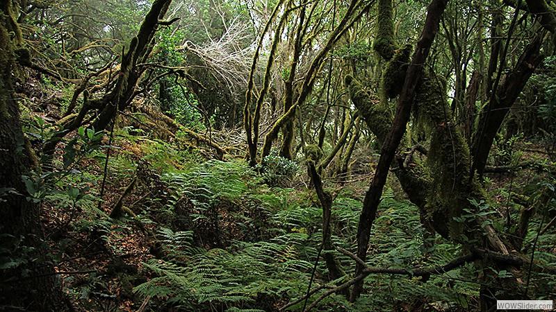 Der Wald von El Cedro