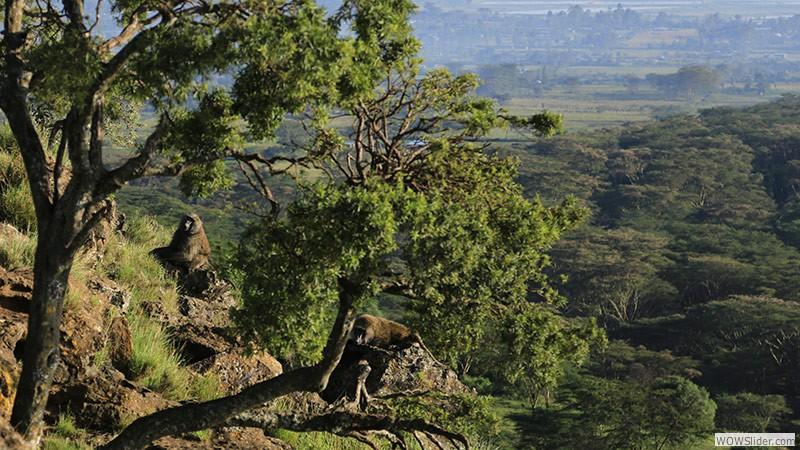 Jambo Kenia